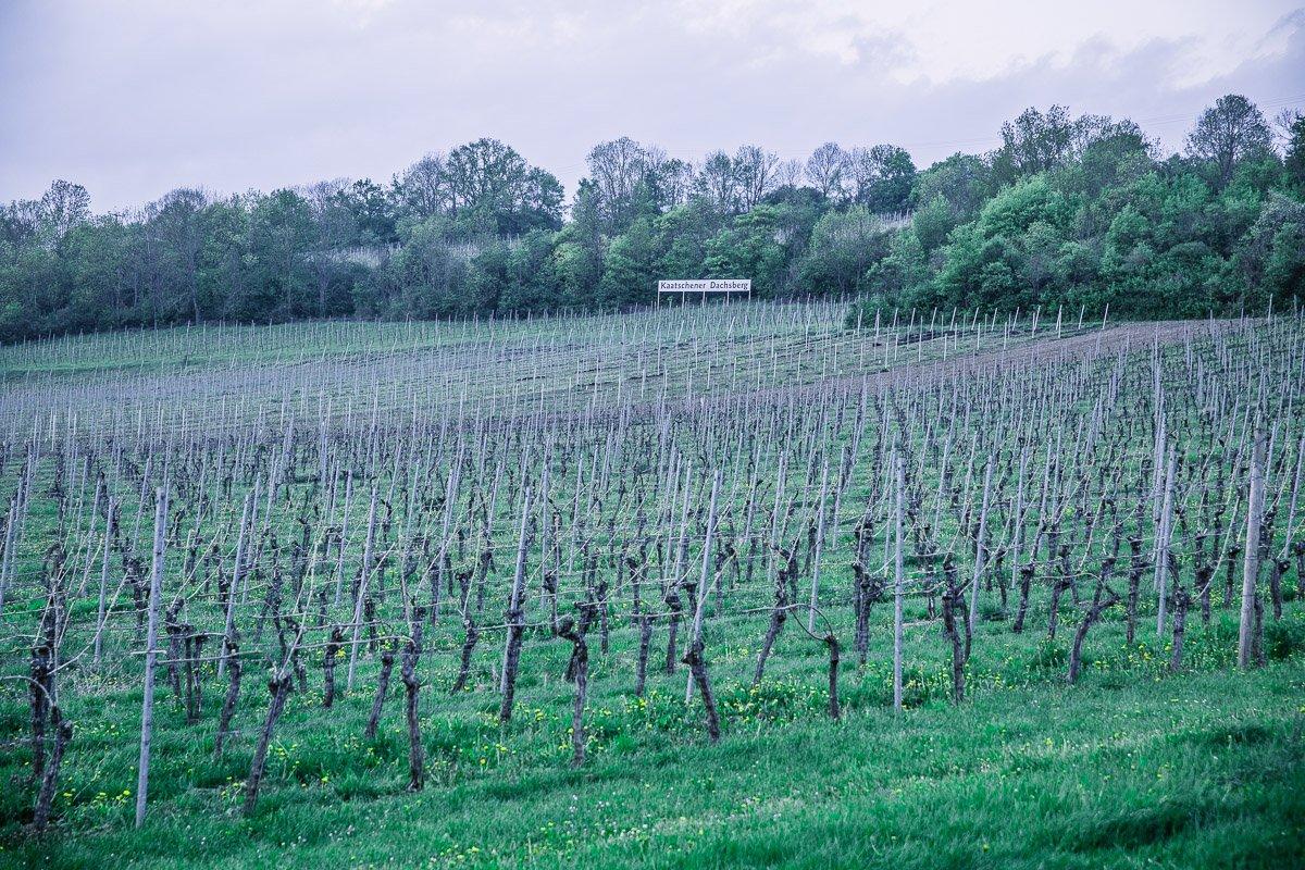 Weimarer Land Weingut Zahn Weinberg